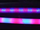 紅藍/1:1 T8 4呎植物燈燈管
