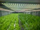 LED植物燈板