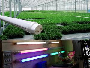 T8  LED燈管 (特製版)特殊的紅光&藍光LED燈管