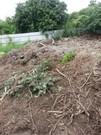 樹枝樹葉清除
