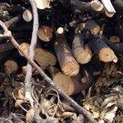 廢樹枝清運