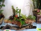 多肉植物組合盆栽